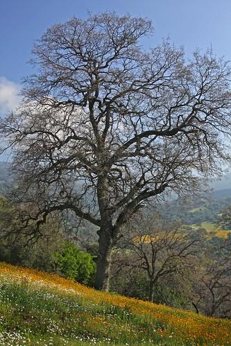 Blue Oak Ranch Preserve