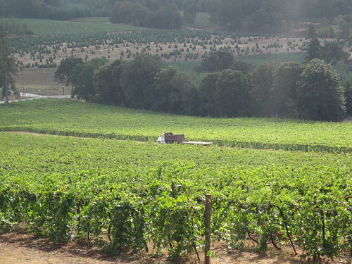 Oregon Wine Country Vacations