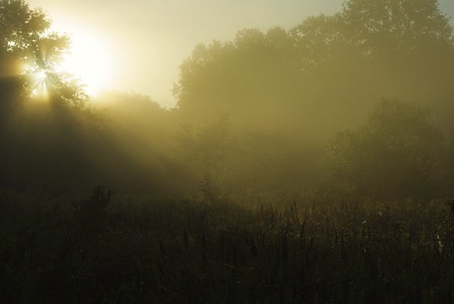 mist fog sunrise sunbeam visualart greatswamp