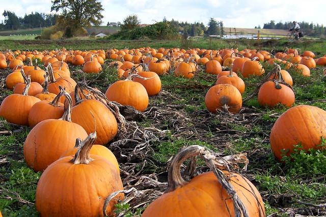 Pumpkin Patch 100_9297
