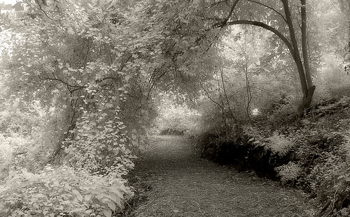 trees ir texas trail infrared dreamy canopy hoya cs3 houstontx r72 houstonarboretum 720nm kodakz700 infraredconversion mauroluna buffetformosquitoes