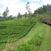 Small photo of Train from Kandy to Ella