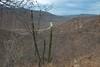 Sierra de la Laguna-1031