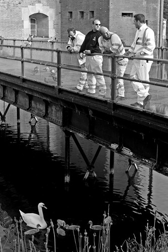 Feeding The Swans, Fort Brockhurst