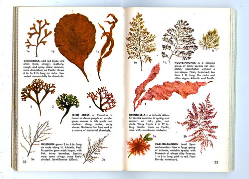 Names Of Sea Plants
