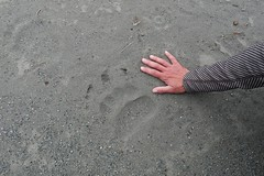 Brown Bear track on Endicott River