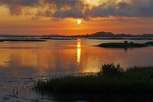 ocean light sky usa sun reflection tree water grass clouds sunrise searchthebest unitedstatesofamerica fl soe cedarkey coth platinumphoto aplusphoto watersnowice perfectsunsetssunrisesandskys planttypes