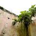 Reapropiación vegetal