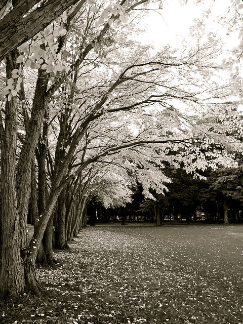 tree bank 2