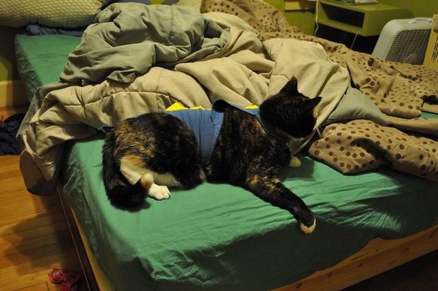 Dinosaur Bed Set Queen