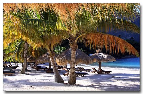 ocean beach water perfect palmtrees caribbean whitesand stlucia perfection saintlucia jalousieplantation picture365 canoniani