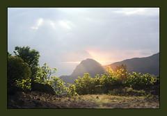 Nature La Gomera