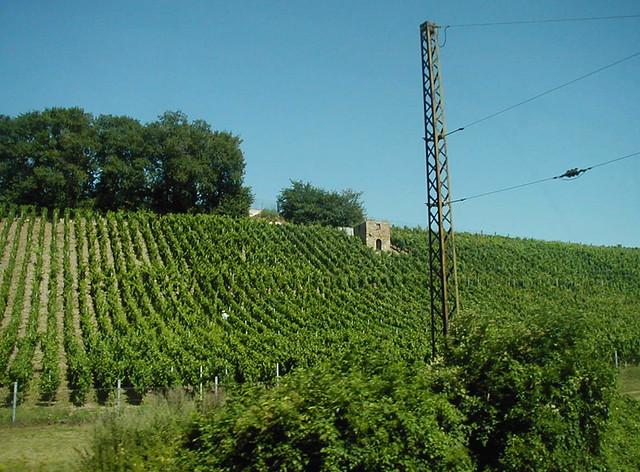Vineyard near Naumburg
