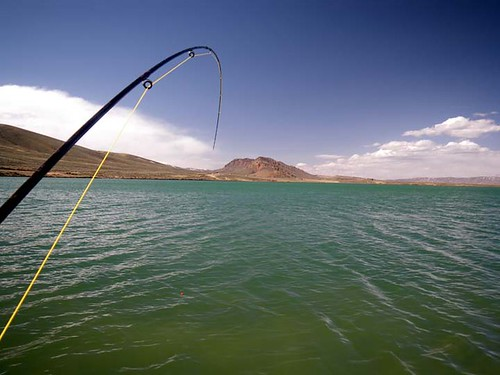 bent rod ultralight fishing gear