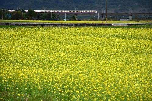 瓦拉米步道-玉里油菜花