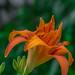 Carot Orange.