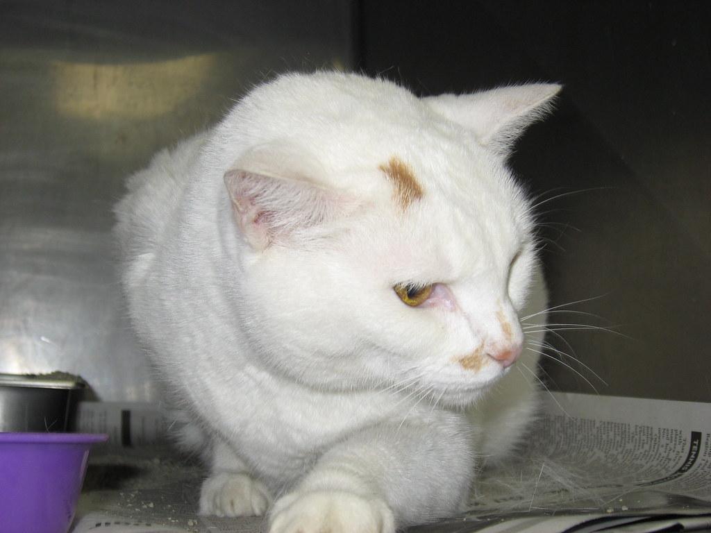 Declawed Cats Adopting Warwick Rhode Island