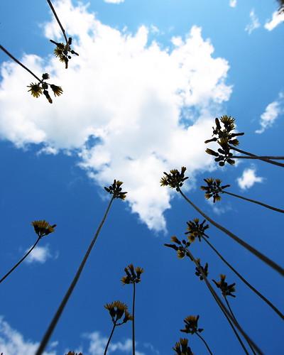 flowers sky up clouds vermont ground wideangle paintbrush vt sunsetblvd randolph longstem canon40d