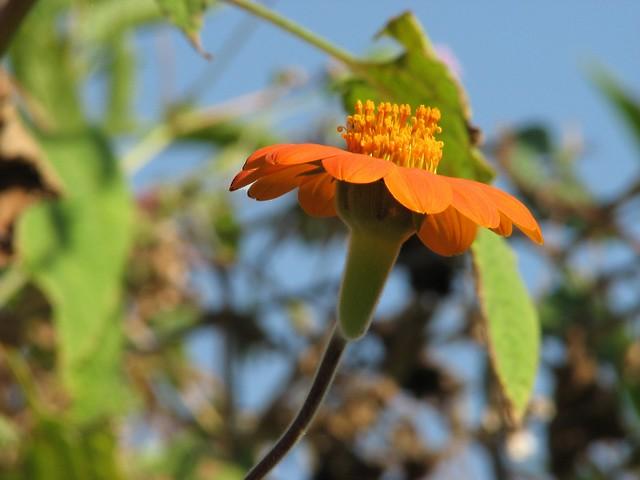 South Africa, Pretoria: Orange day