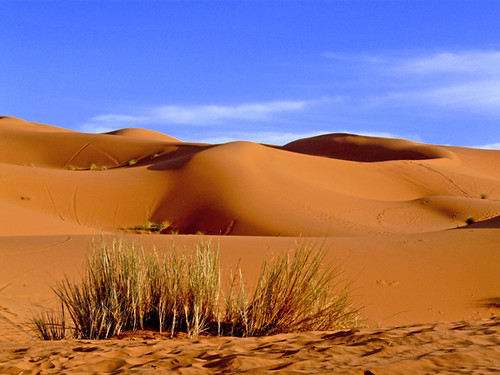 sky orange sahara nature grass landscape sand scenery desert scenic panasonic morocco vegetation sanddune ergchebbi swatimage rositaso