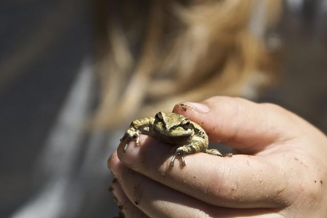 Frog at Central Camp Pond