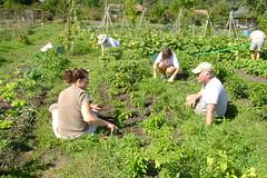 woodland(0.0), flower(0.0), garden(0.0), agriculture(1.0), shrub(1.0), farm(1.0), field(1.0), soil(1.0), gardener(1.0), farmworker(1.0), crop(1.0), rural area(1.0), plantation(1.0),