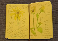 Nature journal - Sept 11 2008
