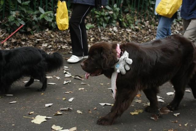 Dogs Trust Glasgow Puppies