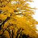 Fall at UMass Lowell