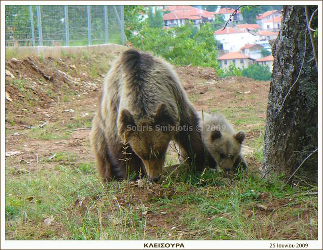 Η αρκούδα με το αρκουδάκι - Greece Macedonia