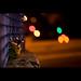 Wall-E Bokeeehhh by Keenen Brown