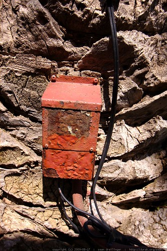 electrical box on a palm tree    MG 2105