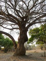 Zambia03SouthLuanga156