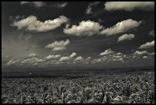 sky blackandwhite india clouds canon coconut kerala 1855mm coconuttrees 500d 3i thiruvananthapuram ireffect vishwaant 3ifactory kissx3 t1i vishwaantin