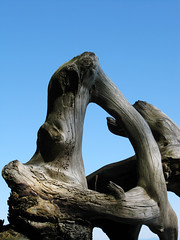 Wood and driftwood