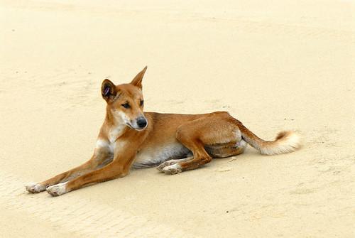 Nya ron om hundens ursprung