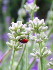 flower, plant, macro photography, subshrub, herb, wildflower, flora,
