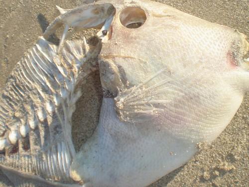 Mexico Fish