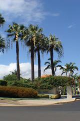 palms at wailea