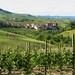 TorreBarolo - Surrounded by vineyards 2