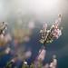 Spring Bokeh - Nature awakes by Xindaan