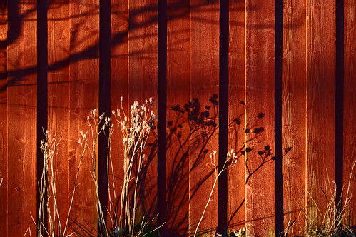 wood shadow red wall barn nikon panel explore columbine falurödfärg d300 aquilegiavulgaris bibble falured