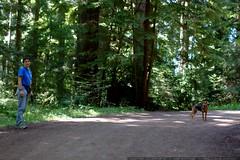 walking in the humboldt redwoods    MG 1068