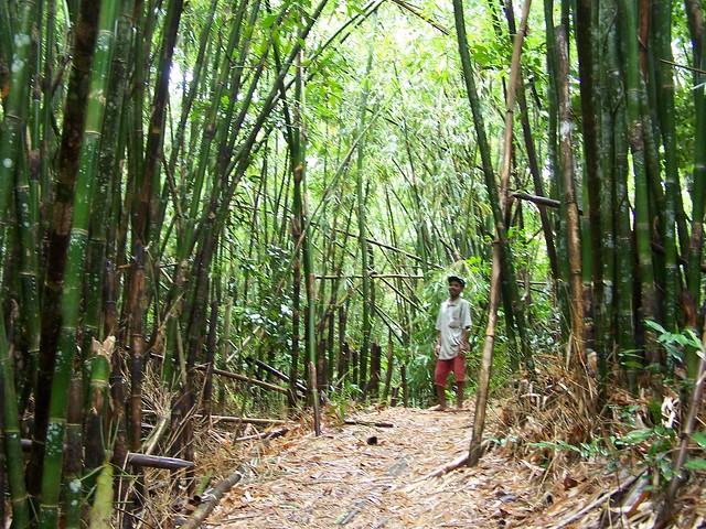 danny in the jungle
