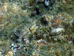 coral(0.0), food(0.0), coral reef(1.0), fish(1.0), marine biology(1.0), invertebrate(1.0), tide pool(1.0), fauna(1.0), underwater(1.0), reef(1.0), wildlife(1.0),