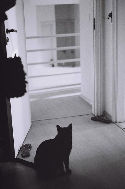 Tem sempre um gato no meu quarto