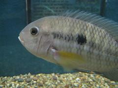 animal, fish, fish, marine biology, fauna, aquarium,