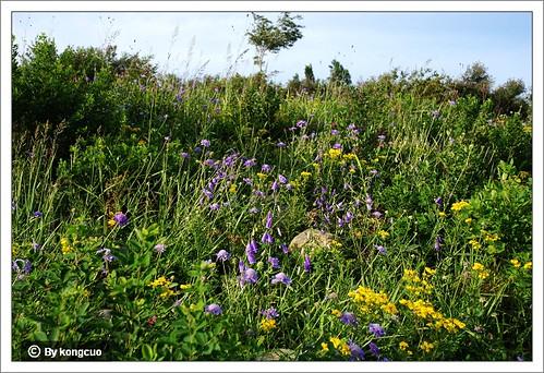 阳台山-萝卜地的返途中遭遇花的草甸