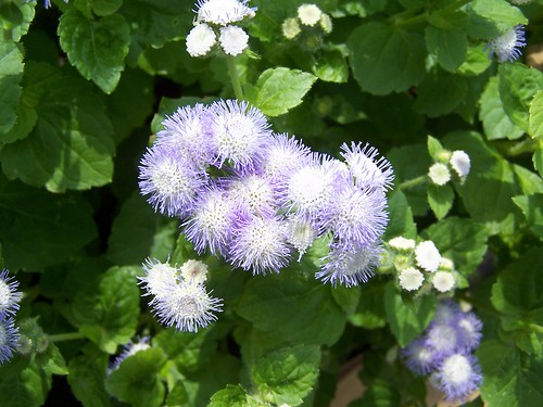 ?? fuzzy purple