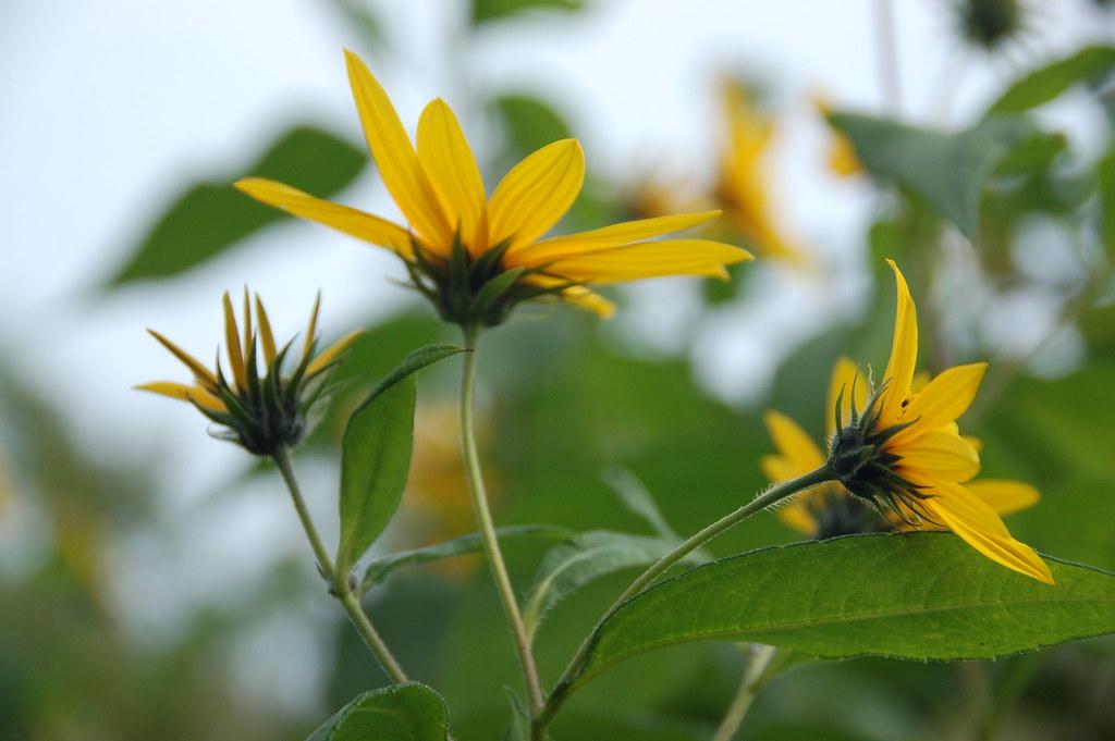 Arnold Arboretum: Late summer flowers
